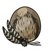 Tawnyfrogmouthegg