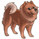 Adult3Chow Chow