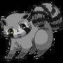 Raccoon36