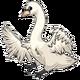 AdultoneMute Swan