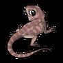 Child3Eastern Bearded Dragon
