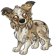 Adult1Shetland Sheepdog