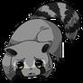 Raccoon16