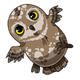 AdolescentSpotted Owlet