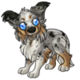 Adult5Shetland Sheepdog