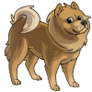 AdultChow Chow