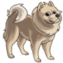 Adult2Chow Chow