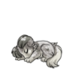 Baby4Shetland Sheepdog