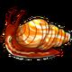 Adult5Common Apple Snail