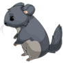 Graywhitechinchilla4