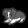 Graypwcpuppy1