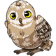 Teen(five)Spotted Owlet