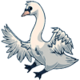 Adult(four)Mute Swan