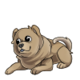 Baby4Chow Chow