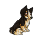 Child2Shetland Sheepdog