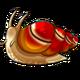 Adult4Common Apple Snail
