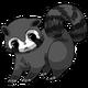 Raccoon31