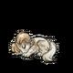 Baby1Shetland Sheepdog