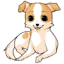 Caramelchihuahuadogstage4