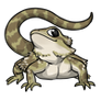 Adult2Eastern Bearded Dragon