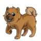 Child5Chow Chow
