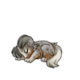 Baby5Shetland Sheepdog