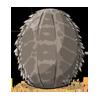 EggEastern Bearded Dragon