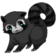 Raccoon35