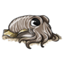 TeenCommon Cuttlefish
