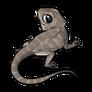 ChildEastern Bearded Dragon