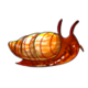 Teen5Common Apple Snail