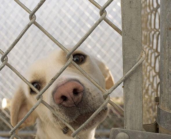 File:738px-Dog in animal shelter in Washington, Iowa.jpg