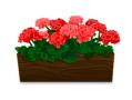 Pink geraniums in pot decal