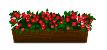 Distant pink geraniums decal