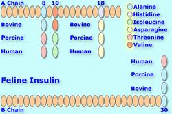 Felineinsulin8