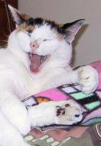 Meow meow-main