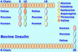 Bovineinsulin8