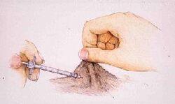 Syringe | Diabetes in Pets | FANDOM powered by Wikia
