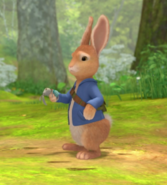 Peter-Rabbit-Looking-For-His-Sister-Cotton-Tail-Rabbit