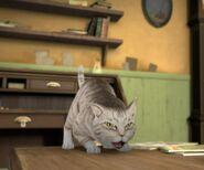 Ready-To-Pouns-Cat