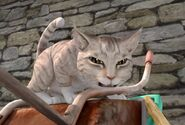 Angery-Cat-Peter-Rabbit-Character-Image0x042982