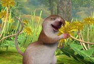 Peter-Rabbit-Shrew-Loves-Flowers-Image