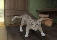 Mr-McGregor's-Pet-Cat-Image