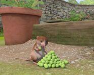 Peter-Rabbit-Character-Shrew-Eating-Peas-Image