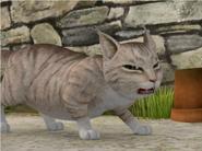 Mr McGregor's Cat Unnamed