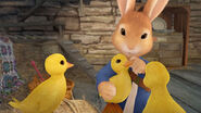 Peter-Rabbit-With-Missing-Ducklings