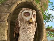 Sleeping-Owl-Brown-Image