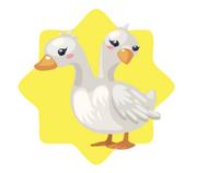 Two Headed Duck