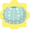 Blue Sea Urchin Shell