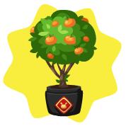 Chinese tangerine plant